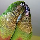 Happy Valentines Day! - Bubbles & Echo - Maroon-bellied  Conure NZ by AndreaEL