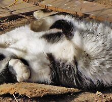 Kitty Acrobatics by trueblvr