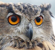 Eurasian Eagle-owl by Lindie Allen