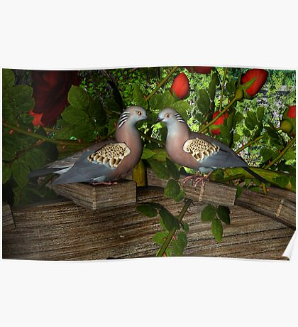 Turtle-doves love Poster