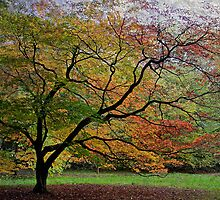 Westonbirt Arboretum, Gloucester, UK by buttonpresser