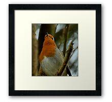 Robin Red-Breast Framed Print