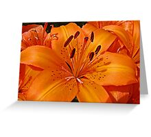 Lilies of the Day Greeting Card
