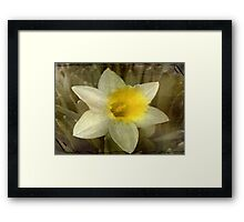 A Melody of Spring!!! © Framed Print