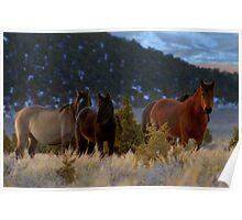 The Joy Of Wild Horses  Poster