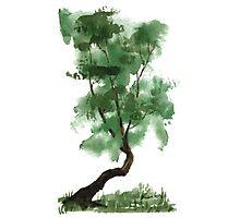 Little Zen Tree 146 Photographic Print