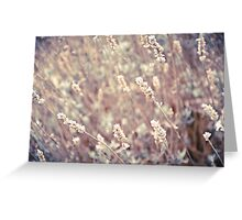 Dried Lavender Greeting Card