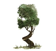Little Zen Tree 149 Photographic Print
