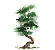 Little Zen Tree 151 Photographic Print
