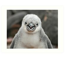 Chinstrap penguin chick Art Print