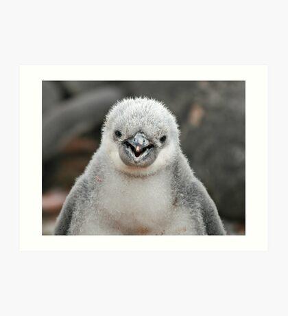 Chinstrap penguin chick Art Print