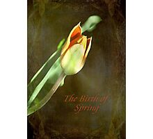 A New Spring © Photographic Print