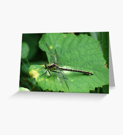 Black-shouldered Spinyleg Greeting Card