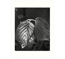 Dappled Light on Leaves Art Print