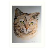 Cat coloured pencil drawing Art Print