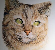 Cat coloured pencil drawing by AlanArt