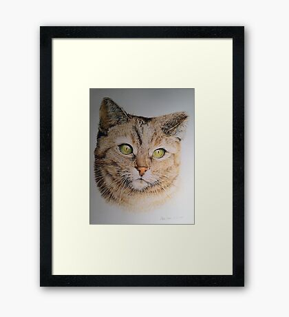 Cat coloured pencil drawing Framed Print