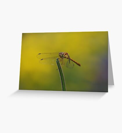 Female Autumn Meadowhawk Greeting Card