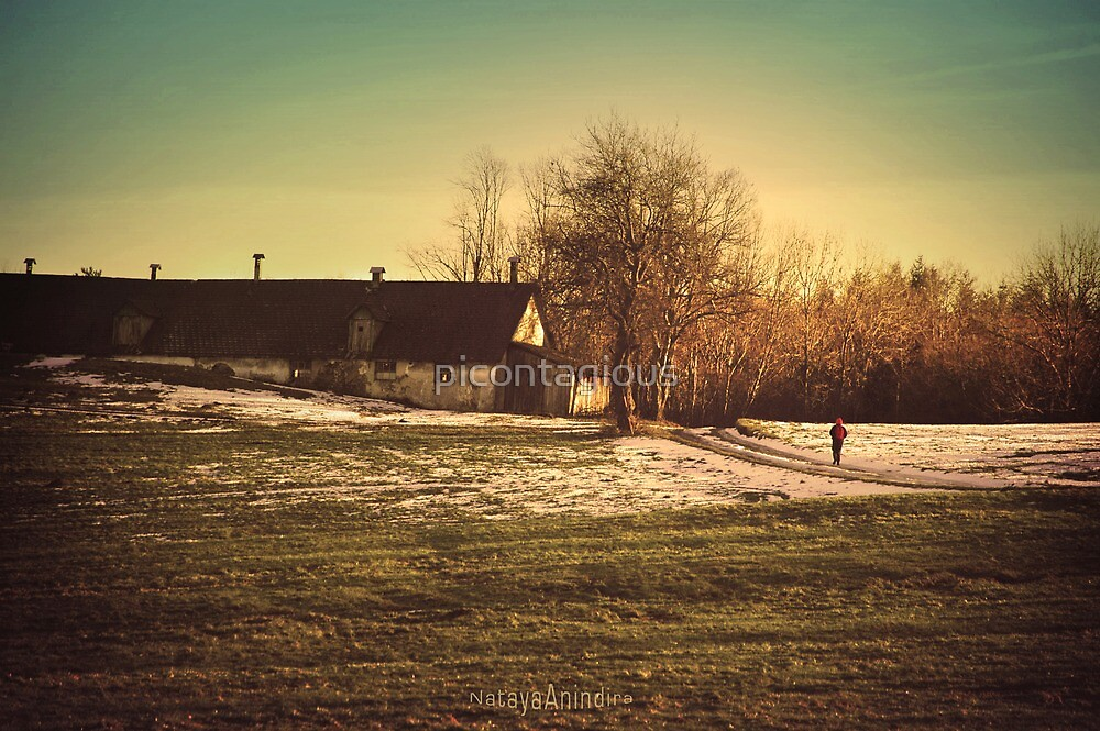 Last Winter Walk  by picontagious