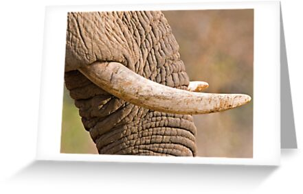 Ivory by Michael  Moss