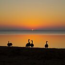 Watching the Sunset with My Friends by NikonJohn