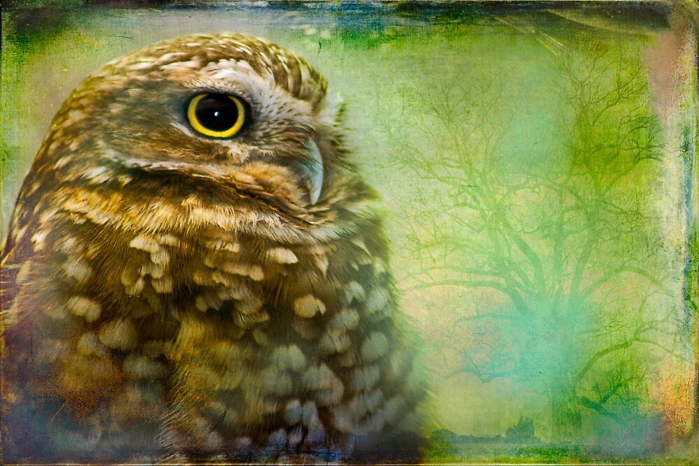 Saw Whet Owl Portrait by alan shapiro