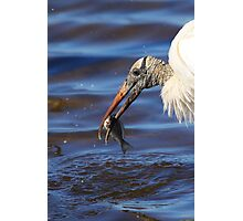 Wood Stork Fishing II Photographic Print