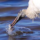 Wood Stork Fishing by naturalnomad