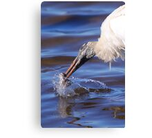 Wood Stork Fishing Canvas Print