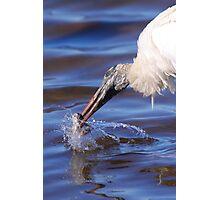 Wood Stork Fishing Photographic Print