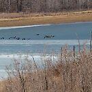 ice flutter by katpartridge