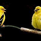 LOVE BIRDS by RoseMarie747