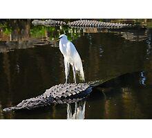 Alligator Rodeo Photographic Print