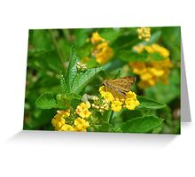 Brown butterfly on yellow flowers Greeting Card
