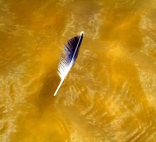 Gull Feather in the Gulf of Mexico by Wanda Raines
