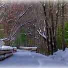 Snow Covered Bike Trail by Monica M. Scanlan