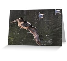 Lake Natoma gull 1 Greeting Card