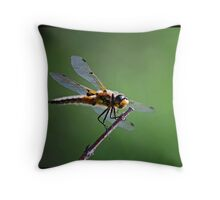 Gold Dragonfly  Throw Pillow