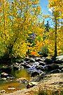"""""""Signs of Fall"""" by Lynn Bawden"""
