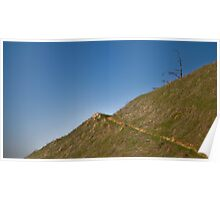 Lone Tree on Mount Tam Poster