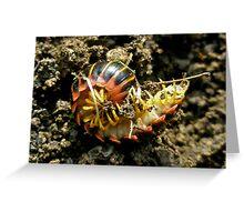 Millipede Polydesmida (Sigmoria aberrans) Greeting Card