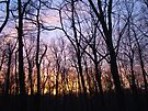 Fire in the Forest Sky Sunset - Green Lane, PA by MotherNature