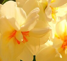 Vanilla Spring by NatureGreeting Cards ©ccwri