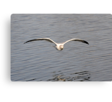 optimized for soaring 4 Canvas Print