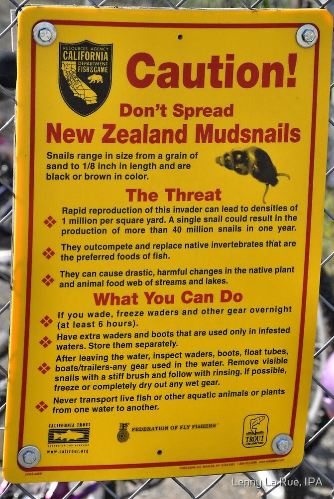 The Dreaded New Zealand Mudsnails by Lenny La Rue, IPA