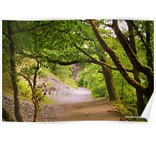 Plymbridge Woods Poster