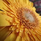 macro slanted view by gaylene