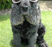 Super cool spaniel by LynnLondon