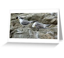 Crested terns Greeting Card