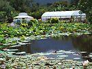 Hot houses at Blue lotus by Lynne Kells (earthangel)